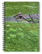 Alligator In Swamp Spiral Notebook