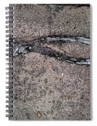 Alligator Skull Fossil 3 Spiral Notebook