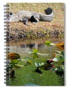 Alligator Sunbathing Spiral Notebook