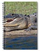 Alligator Sunning Spiral Notebook