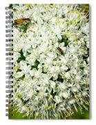 Allium Flower And Lightning Bug Spiral Notebook