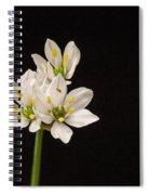 Allium Species 1 Spiral Notebook