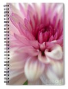 Alluring Spiral Notebook