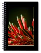 Aloe Bloom Window 2 Spiral Notebook