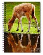 Along The Water Grazing Pere David's Deer Spiral Notebook