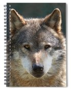 Alpha Male Wolf - I'm Watching You Spiral Notebook