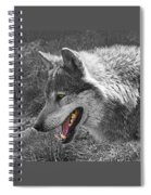 Alpha Male Wolf - You Look Tasty 2 Spiral Notebook