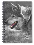 Alpha Male Wolf - You Look Tasty Spiral Notebook