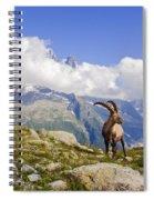 Alpine Ibex Spiral Notebook