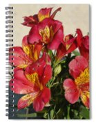 Alstroemeria In Pastel Spiral Notebook