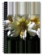 Alstroemeria Named Marilene Staprilene Spiral Notebook