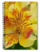 Alstroemerias Flower 1 Spiral Notebook