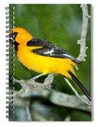 Altamira Oriole Spiral Notebook