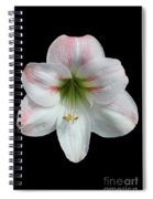 Amaryllis #2 Spiral Notebook