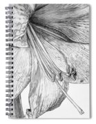 Amaryllis Spiral Notebook