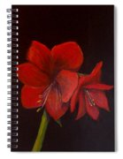 Amaryllis On Black Spiral Notebook