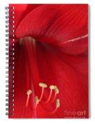 Amaryllis6720 Spiral Notebook