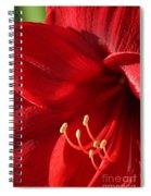 Amaryllis6782 Spiral Notebook