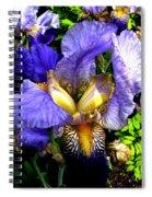 Amazing Iris Spiral Notebook