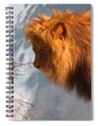 Amazing Male Lion Spiral Notebook