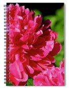 Amazingly Spiral Notebook