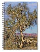 Amboy Shoe Tree By Diana Sainz Spiral Notebook