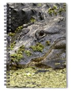 American Alligator Print Spiral Notebook