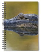American Alligator Reflection Spiral Notebook