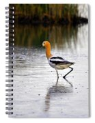 American Avocet Spiral Notebook