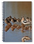 American Avocet And Sleeping Dowitchers Spiral Notebook
