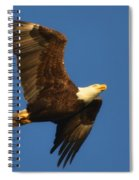 American Bald Eagle Close-ups Over Santa Rosa Sound With Blue Skies Spiral Notebook