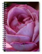 American Beauty IIi Spiral Notebook