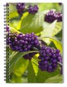 American Beautyberry -callicarpa Americana Spiral Notebook