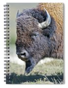 American Bison Closeup Spiral Notebook