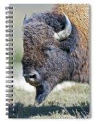 American Bison Closeup Spiral Notebook