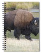 American Bison On The Madison River Spiral Notebook