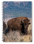 American Bison Trio Spiral Notebook