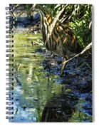 American Bittern - Keeping A Low Profile Spiral Notebook