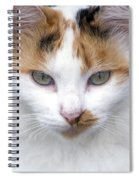 American Calico Cat Portrait Spiral Notebook