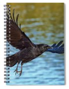 American Crow Flying Over Water Spiral Notebook