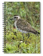 American Golden Plover Spiral Notebook