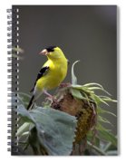 American Goldfinch 5 Spiral Notebook