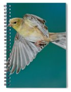 American Goldfinch Hen In Flight Spiral Notebook
