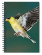 American Goldfinch Male-flying Spiral Notebook