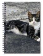 American Grey Tiger Stripe Kitten Portrait Spiral Notebook