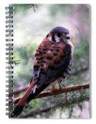 American Kestral Spiral Notebook