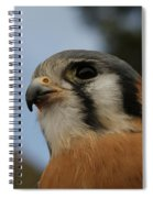 American Kestrel 2 Spiral Notebook