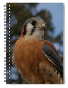 American Kestrel 4 Spiral Notebook