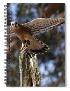 American Kestrel Spiral Notebook