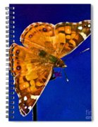 American Lady Butterfly Blue Square Spiral Notebook
